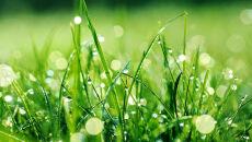 Uczuleni na pyłki roślin odetchną