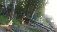 Zniszczenia spowodowane przez bobry