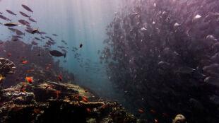Życie w oceanach zamiera. Straty będą ogromne, ostrzegają naukowcy