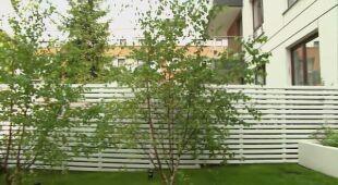 Rodzinny ogródek z brzeziną (odc. 624)